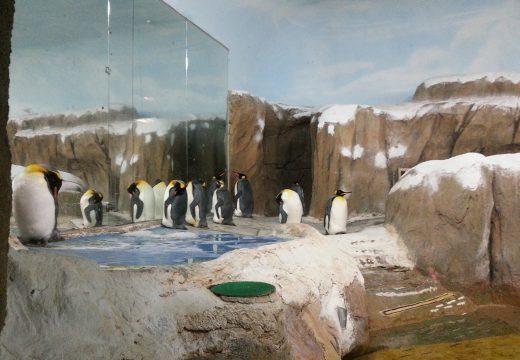 Tapei zoo